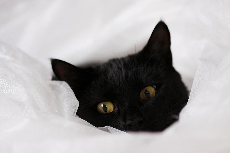 Il gatto inverno gatti intorno a noi for Il gatto inverno